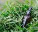 Productos derivados de aceite de cannabis de venta en México