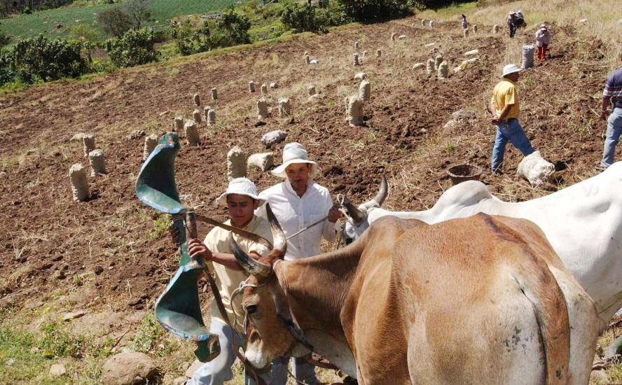 Certificaciones para el sector agropecuario