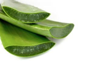 ¿Sabes cómo se obtiene la pulpa de Aloe?