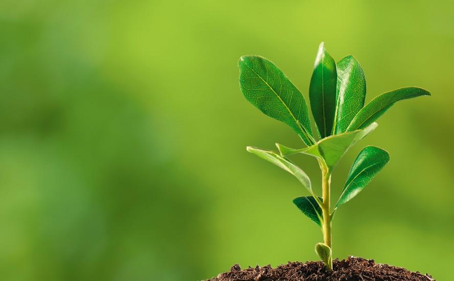 Bioestimulantes, una nueva era en agricultura