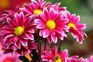 Flores y dinosaurios, ¿cómo es la actual industria floricultora en México?