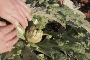 Oxidación de verduras, ¿cómo evitarla?